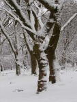 Woodland Snow, Hirwaun(2)