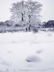 Snow, trees and fields, Hirwaun(4)