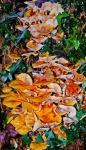 Autumn fungi (wide view).