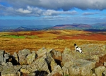 Eric surveys the scene on Llangynidr mountain.