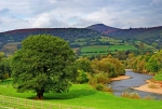 A majestic old oak, the river Usk and Sugar Loaf mountain, Abergavenny, South Wales.