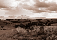 20.The PYF range from Llandefalle(sepia)