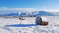 Bracken Bales and Pen y Fan