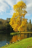 10Stourhead Autumn 2010