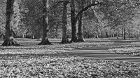 Bute Park Mono, Cardiff, S.Wales