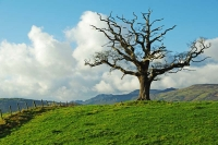 Dead Sentinel, Conwy Valley, N.Wales