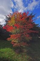 Autumnal Details from Westonbirt Arboretum (10)