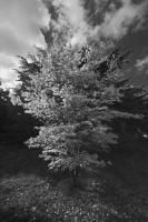 Autumnal Details from Westonbirt Arboretum (11)