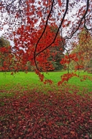 Autumnal Details from Westonbirt Arboretum (3)