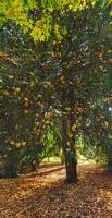Autumnal Details from Westonbirt Arboretum (5)