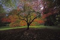 Autumnal Details from Westonbirt Arboretum (7)