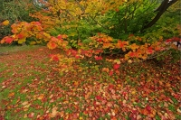 Autumnal Details from Westonbirt Arboretum (9)