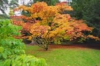 Autumnal Details from Westonbirt Arboretum(1)