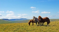 The same obliging ponies posing with Fan Hir and Fan Brycheiniog in the distant west